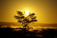 Dusk in Namibia Royalty Free Stock Image