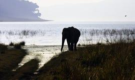 Dusk over Ramganga Reservoir with wild Indian elephant in Jim Corbett National Park, India. Dusk over Ramganga Reservoir with wild Indian elephant /Elephas royalty free stock photography