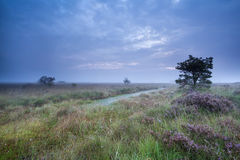 Dusk over swamp with flowering heather Royalty Free Stock Photos