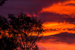 Dusk. A precious, colorful dusk with orangish clouds Royalty Free Stock Photo