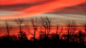 Dusk red in nature, clouds, trees stock footage