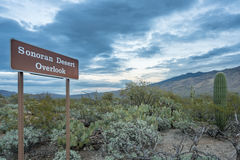Dusk in Saguaro National Park Tucson. Sonoran Desert Overlook sign in Saguaro National Park East near Tucson Arizona Royalty Free Stock Images