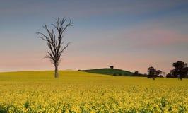 Dusk skies over farmland canola fields Stock Images