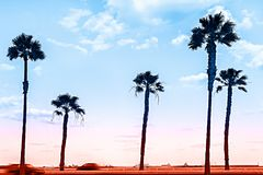 From Dusk till Dawn. Silhouettes of Palm Trees and Coloful Sky Background on the Sea stock images