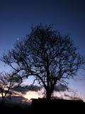 Dusk Tree Stock Photos