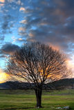 Dusk tree background Royalty Free Stock Images