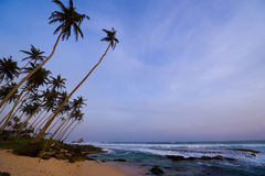 Dusk view of high palm tree on the beach Stock Images