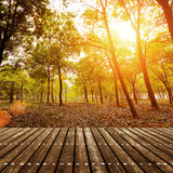 At dusk the woods Royalty Free Stock Photo