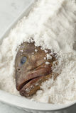 Dusky grouper fish in sea salt Stock Images