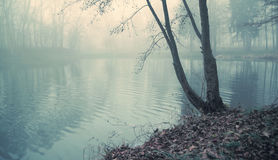 Dusky lake in heart of the forest Royalty Free Stock Photos