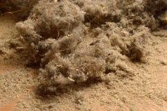 dust photographie stock