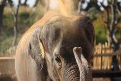 Dust bath elephant Royalty Free Stock Image