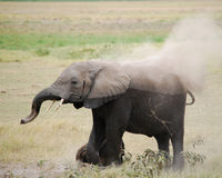 Dust Bath Royalty Free Stock Images