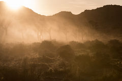 Dust Clouds the Air During Sunset at Joshua Tree Stock Photography