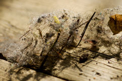 Dust of hairs  over the wooden background, macro Stock Image