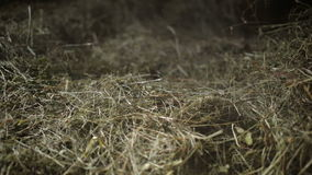 Dust in the hayloft stock video footage