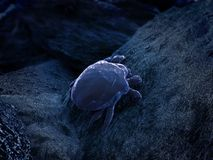 Dust mite Stock Images