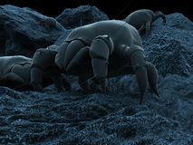 Dust mite illustration Stock Photo
