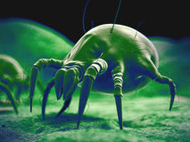 The dust mite Royalty Free Stock Photo