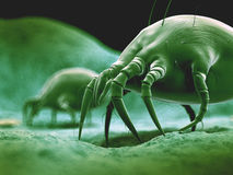The dust mite Royalty Free Stock Photos