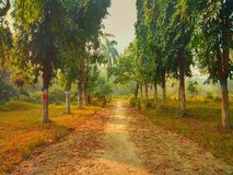 A dust path and trees along with both sides. A dust path in the garden and trees along with both sides royalty free stock photo