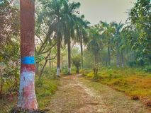 A dust path and trees Of bottle-pump along with both sides. A dust path in the garden and trees along with both sides royalty free stock photography