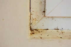 Dust on window frame in house. Dust on white window frame in house stock images