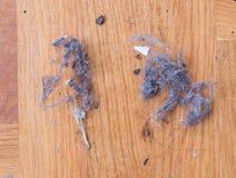 Dust on wooden floor Stock Image
