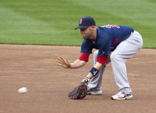 Dustin Pedroia Stock Photography