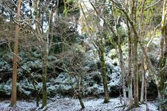 A dusting of snow on the forest floor. Snow on the forest floor after the winter storm in southern Japan stock photography