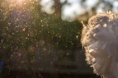 Dusts werden im Sonnenlicht nach Hausreinigung gerüttelt stockbilder