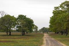 Dusty Country Driveway Fotografia Stock Libera da Diritti
