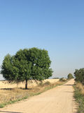 Dusty country road. A lonely tree flanking a dusty road near the village of Izvorălu, Mehedinți county, Romania Royalty Free Stock Image