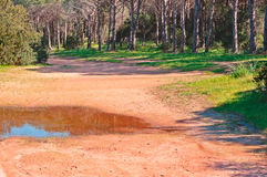 Dirt road to Cala Brandinchi. Dusty dirt road to Cala Brandinchi Stock Images