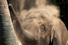 Dusty elephant Royalty Free Stock Photo