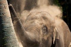 Dusty elephant Royalty Free Stock Photo