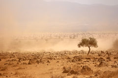Dusty plains during a drought Royalty Free Stock Photography