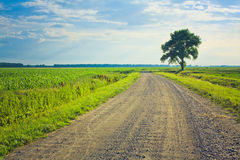 Dusty road with alone tree Stock Photo