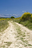 Dusty road in the field Stock Photography