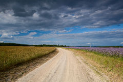 Dusty road between fields Stock Photography