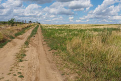 Dusty road. Between fields and vineyard Royalty Free Stock Images