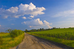 Dusty road leads through the fields and meadows Royalty Free Stock Images