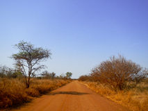 Dusty road in the middle of savannah , Kruger, South Africa Stock Images