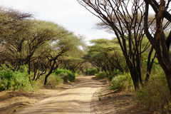 Dusty road od Serengeti Royalty Free Stock Photo