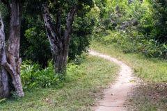 Dusty safari road, Madagascar Royalty Free Stock Image
