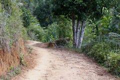 Dusty safari road, Madagascar Royalty Free Stock Photos