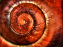 Dusty Snail. A snail shell, taken using an Olloclip macro lens at 21x magnification, creative, art, abstract, iPhoneography royalty free stock photo