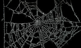 Dusty spider web Royalty Free Stock Photos