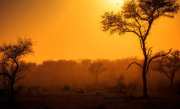 A Dusty Sunrise in South Africa. A Dusty Sunrise with Trees Silhouetted in South Africa stock photography
