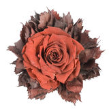 Dusty Textile Flower   Isolated